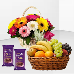 Hearty Present of Dairy Milk Silk with Gerberas Arrangement and Juicy Mixed Fruits Basket