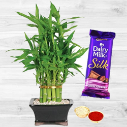 2 Tier Bamboo Plant N Silk Chocolates
