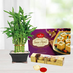 Bamboo Plant with Soan Papdi N Ferrero Rocher Chocolates