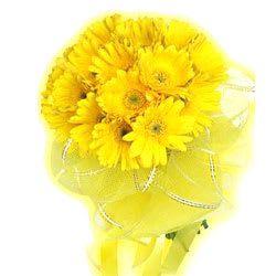 Bright Yellow Gerberas Bunch