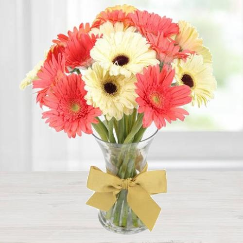 Blooming Bounce Gerbera Collection