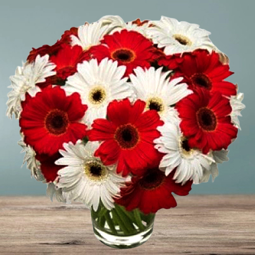 Sublime Radiance Gerbera Bundle