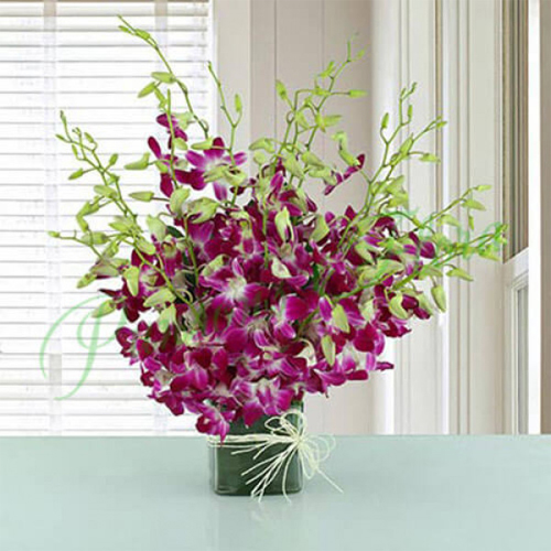 Elegant Collection of Orchids in a Glass Vase